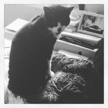 cat bw